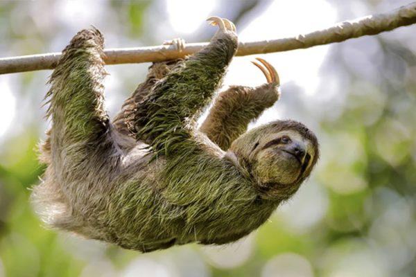 Sloth-800x450