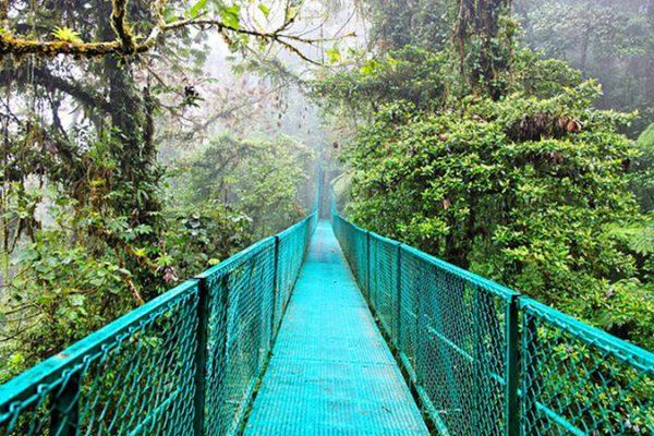 costa-rica-monteverde-cloud-forest-800x450