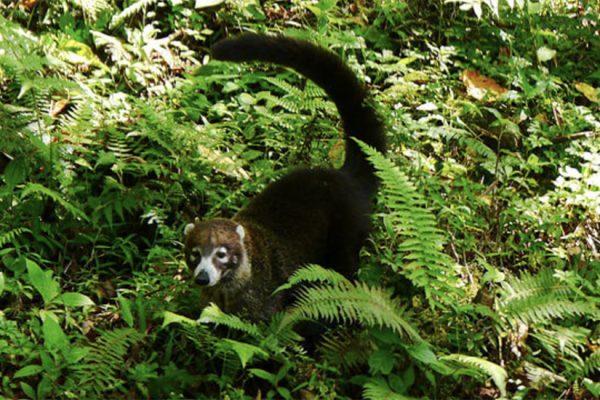 wildlife-900x550-07.jpg