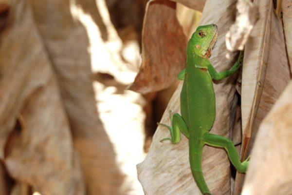 wildlife-900x550-08.jpg
